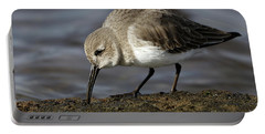 Dunlin Calidris Alpina  Portable Battery Charger