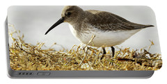 Dunlin In The Brown Grasses Portable Battery Charger