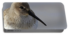 Dunlin Sandpiper Portrait Portable Battery Charger