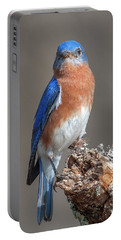 Eastern Bluebird Dsb0300 Portable Battery Charger