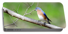 Portable Battery Charger featuring the photograph Eastern Bluebird by George Randy Bass