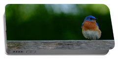 Eastern Bluebird - Male Portable Battery Charger