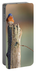 Portable Battery Charger featuring the photograph Eastern Bluebird Portrait by Bill Wakeley