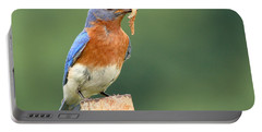 Eastern Bluebird With Caterpillar Lunch Portable Battery Charger