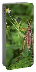 Eastern Lubber Grasshopper  Portable Battery Charger