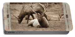 Portable Battery Charger featuring the photograph Elk by Athala Carole Bruckner
