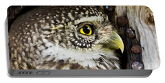 Eurasian Pygmy Owl In Profile Portable Battery Charger