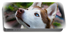 Expressive Siberian  Husky Photo C62017 Portable Battery Charger