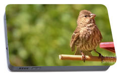 Female Crossbill At Feeder      Summer      Indiana Portable Battery Charger by Rory Cubel