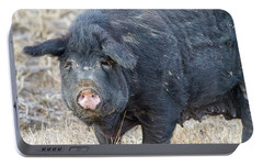 Portable Battery Charger featuring the photograph Female Hog by James BO Insogna