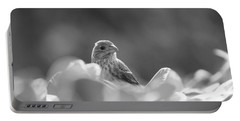 Female House Finch Perched In Black And White Portable Battery Charger