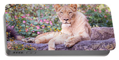 Female Lion Resting Portable Battery Charger by Stephanie Hayes