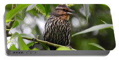 Female Redwinged Blackbird Portable Battery Charger