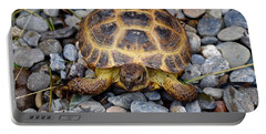 Female Russian Tortoise Portable Battery Charger