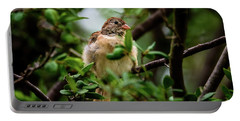 Field Sparrow Sitting Pretty Portable Battery Charger