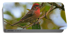 Finch Portraiture Portable Battery Charger