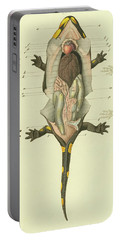 Fire Salamander Anatomy Portable Battery Charger