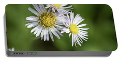Fleabane, Erigeron Pulchellus - Portable Battery Charger