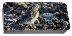 Fledgling Mountain Bluebird Portable Battery Charger