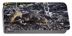 Squirrel Pprh Woodland Park Co Portable Battery Charger