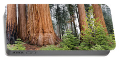 Portable Battery Charger featuring the photograph Forest Growth by Peggy Hughes