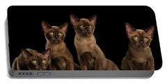 Four Cute Burma Kittens Sitting, Isolated Black Background Portable Battery Charger