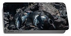 Galapagos Penguins  Bartelome Bartholomew Island Galapagos Islands Portable Battery Charger