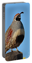 Portable Battery Charger featuring the photograph Gambel's Quail On Sunny Perch by Max Allen