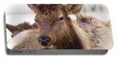 Portable Battery Charger featuring the photograph Gaze From A Bull Elk by Jeff Swan