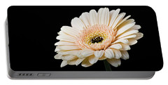 Portable Battery Charger featuring the photograph Gerbera Daisy On Black II by Clare Bambers