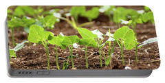Portable Battery Charger featuring the photograph New Sprouts In The Promised Land by Yoel Koskas