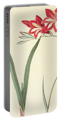 Gladiolus Cardinalis Portable Battery Charger