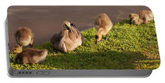 Goslings Basking In The Sunset Portable Battery Charger by Chris Flees