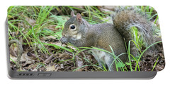 Gray Squirrel Eating Portable Battery Charger