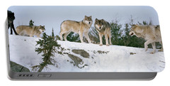 Gray Wolves Canis Lupus In A Forest Portable Battery Charger