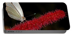 Portable Battery Charger featuring the photograph Great Southern White by Judy Vincent