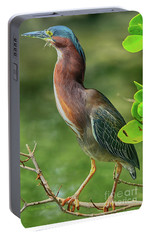 Portable Battery Charger featuring the photograph Green Heron Pose by Deborah Benoit