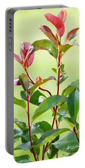 Greenery And Red Portable Battery Charger