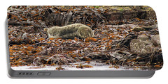 Portable Battery Charger featuring the photograph Grey Seal by Tony Murtagh