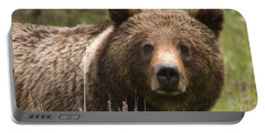 Grizzly Portrait Portable Battery Charger by Steve Stuller