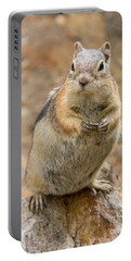 Portable Battery Charger featuring the photograph Grumpy Squirrel by Chris Scroggins