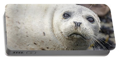 Harbor Seal Portrait Portable Battery Charger