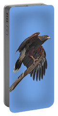Harris Hawk - Transparent Portable Battery Charger