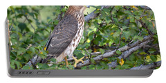 Portable Battery Charger featuring the photograph Hawk  by AJ Schibig