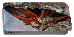 Portable Battery Charger featuring the photograph Hidden Treasure by Colleen Coccia
