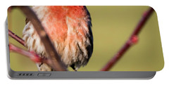 House Finch In Full Color Portable Battery Charger by Ricky L Jones