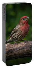 House Finch Portable Battery Charger