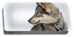 Portable Battery Charger featuring the photograph Husky Dog by Delphimages Photo Creations