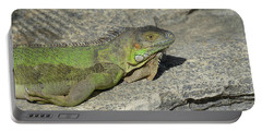 Iguana Warming In The Sunshine Portable Battery Charger by DejaVu Designs