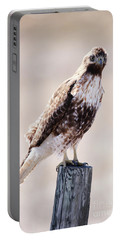 Immature Red Tailed Hawk Portable Battery Charger